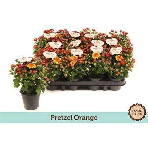 Хризантема претцель оранжевая