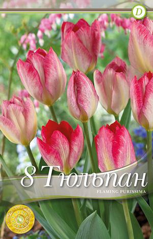 Тюльпан Фламинг Пуриссима