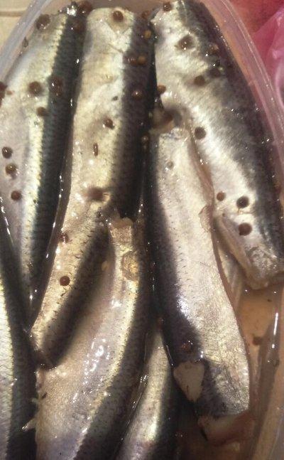 🐟 Вкуснейшая рыбка, икра! Омега-3, бады!  — Салака — Соленые и копченые