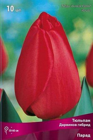 Тюльпан (Дарвинов гибрид) - Парад