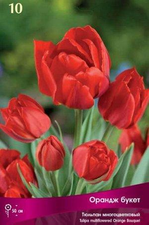Тюльпан (Многоцветковый) - Орандж букет