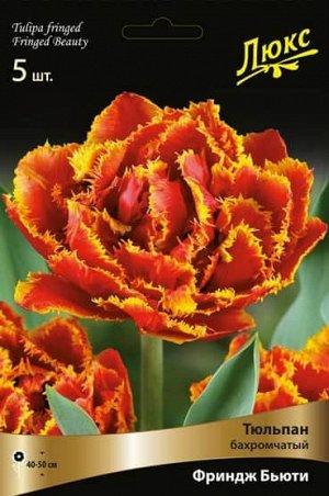 Тюльпан (Бахромчатый) - Фриндж Бьюти (Люкс)