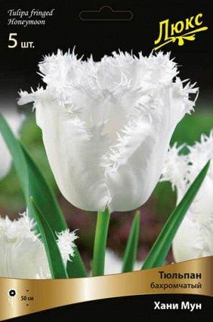 Тюльпан (Бахромчатый) - Ханимун