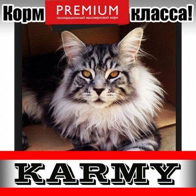 Karmy - корм для собак и кошек премиум класса! №30 — Karmy Корм для кошек породы Мэйнкун! — Корма