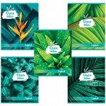 Тетрадь А5, 48 л., BRAUBERG, клетка, обложка картон, GREEN NATURE, 403033