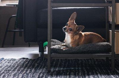 ✔IKEA 451♥ Идеи и вдохновение ♥  — IKEA вашим питомцам — Для животных