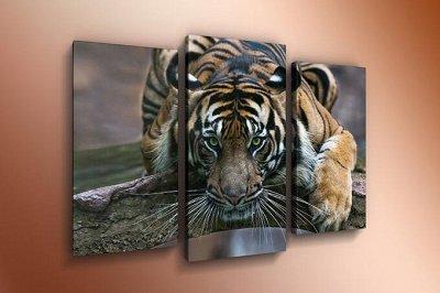 ♥ Картины и Часы - 63 ♥ Новинки!  — Модульные картины-Животные — Картины