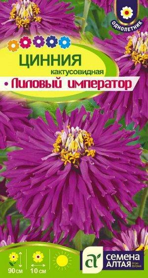 Цветы Цинния Лиловый Император кактусовидная/Сем Алт/цп 0,2 гр.
