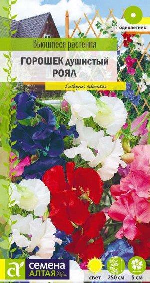 Душистый горошек Роял/Сем Алт/цп 0,5 гр. Вьющиеся растения