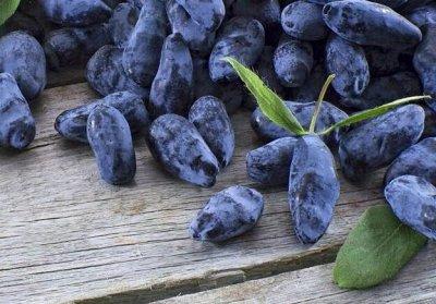Сибирские Саженцы Плодово-Ягодные 🍏🍒 — Жимолость - Высокоурожайные, морозостойкие сорта — Плодово-ягодные