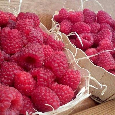 Сибирские Саженцы плодово-ягодных 🍏 🍒 * Осень — Малина - Обычная и Ремонтантная — Плодово-ягодные