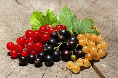 Сибирские Саженцы плодово-ягодных 🍏 🍒 * Осень — Смородина — Плодово-ягодные