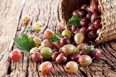 Сибирские Саженцы Плодово-Ягодные 🍏🍒 — Крыжовник — Плодово-ягодные