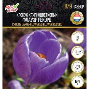 Крокус крупноцветковый Флауэр Рекорд, р-р 7/8, 10 шт