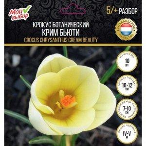 Крокус ботанический Крим Бьюти, р-р 5/+, 10 шт