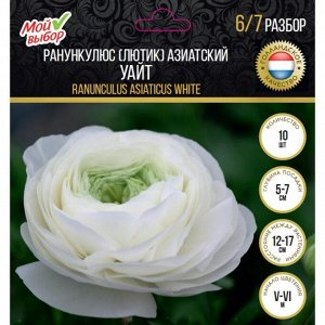Ранункулюс (Лютик) азиатский Уайт, р-р 8/+, 10 шт