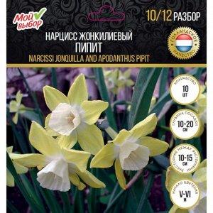 Нарцисс жонкилиевый Пипит, р-р 10/12, 10 шт