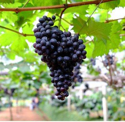 Домик на Зиму для Роз, Винограда, Гортензий и пр .🌲🌹🌺 - 4 — Укрытия на зиму для винограда — Парники и теплицы