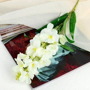 Цветы искусственные Орхидея Дендробиум5,5*90 см, белый