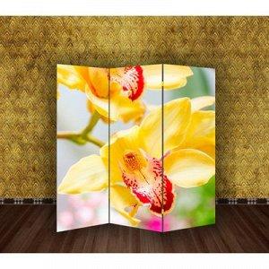 "Ширма ""Орхидеи"", 160 ? 150 см"