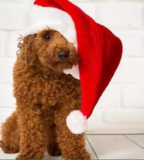 Письма Дедушке Морозу, календари на 2021 год. Много новинок  — Маскарадные маски, колпаки, короны. НОВИНКИ ДОБАВИЛИ! — Все для Нового года