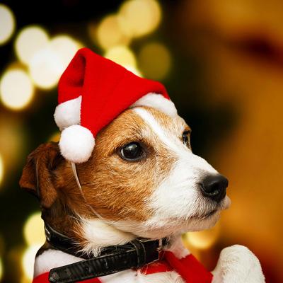 💫Новый 2021 год! Много подарков и декора!💫 — украшения для собак — Все для Нового года