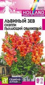 Львиный зев Снэппи Пылающий оранжевый/Сем Алт/цп 10 шт ГОЛЛАНДИЯ