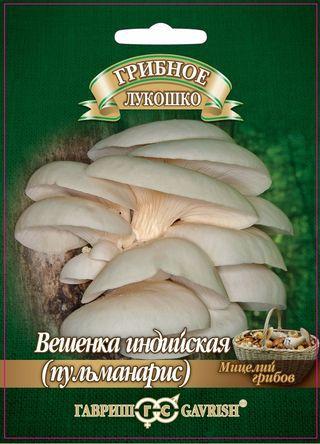 Алтайские семена — Грибы Мицелий — Мицелии грибов