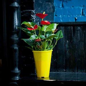 """Горшок для цветов  """"Роза Р20"""", D14"""