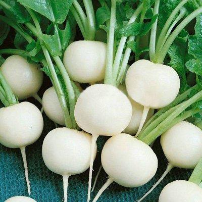 2000 видов семян для посадки! Подкормки, удобрения. — Семена Редьки, Дайкона — Семена овощей