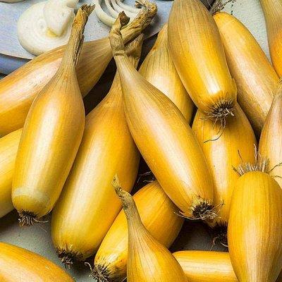 Семена от бегонии до петунии, а также семена овощей и зелени — Лук, морковь — Семена овощей