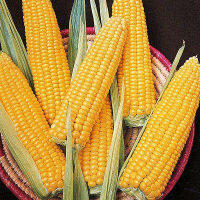 2000 видов семян для посадки! Подкормки, удобрения. — Семена Кукурузы. Только ХИТЫ! — Семена овощей