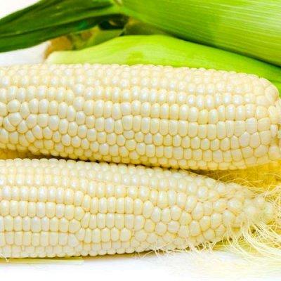 2000 видов семян для посадки! Подкормки, удобрения.   — Семена Кукурузы — Семена овощей