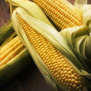 Кукуруза сахарная Золотой батам