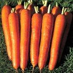 Морковь Витаминная 6 ЧБ