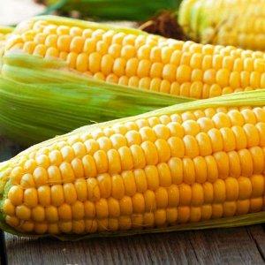 Кукуруза Соблазн (сахарная)