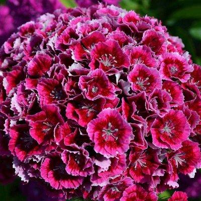 2000 видов семян для посадки!Подкормки, удобрения. — Цветы двулетние — Семена двулетние
