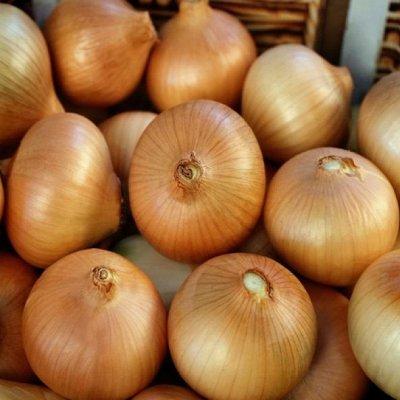2000 видов семян для посадки! Подкормки, удобрения.     — Семена Лук репчатый от 6р! — Семена овощей