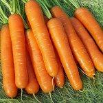 Морковь Нантская 4 ЧБ