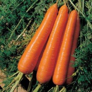 Морковь Флаккоро