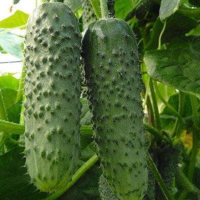 Семена, Удобрения, садовые штучки в наличии — Семена до 12.2020 - со скидкой 40%
