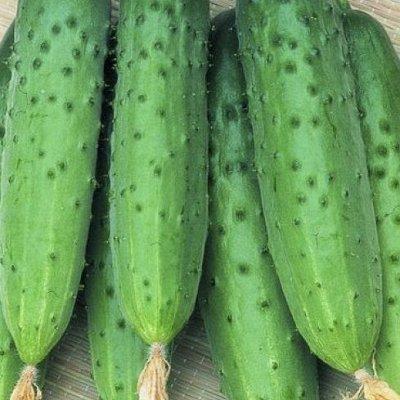 Дачный сезон! НЕ ПРОПУСТИ! Более 2000 видов семян!   — Семена Огурцов. ХИТЫ от 9р! — Семена овощей