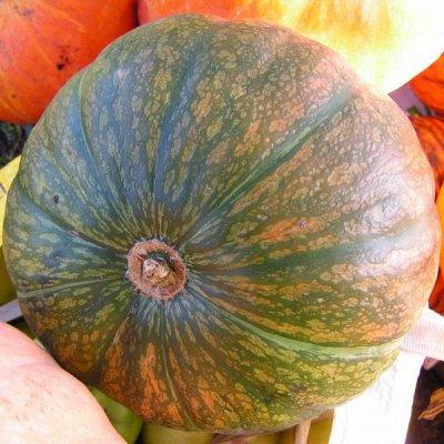 Дачный сезон! НЕ ПРОПУСТИ! Более 2000 видов семян!   — Семена Тыквы — Семена овощей