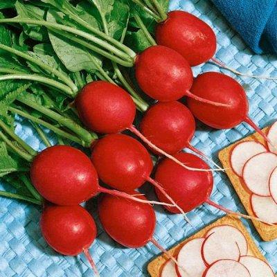 2000 видов семян для посадки! Подкормки, удобрения.     — Семена Редиса — Семена овощей