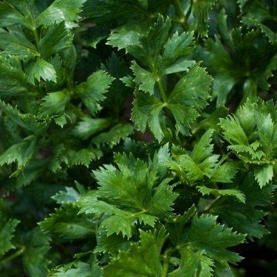 Луковичные цветы, удобрения, садовые штучки.Быстрая раздача! — Семена овощей и зелени. В наличии — Семена