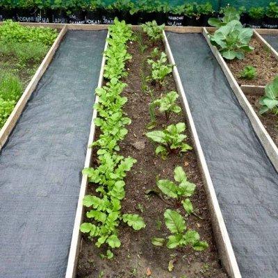 2000 видов семян для посадки!-48 Подкормки, удобрения. — Укрывной материал, пленка — Парники и теплицы