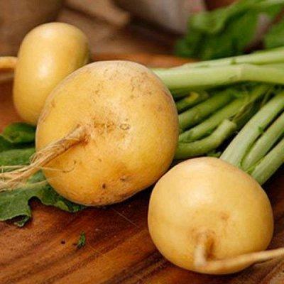 2000 видов семян для посадки! Подкормки, удобрения. — Семена Репы — Семена овощей