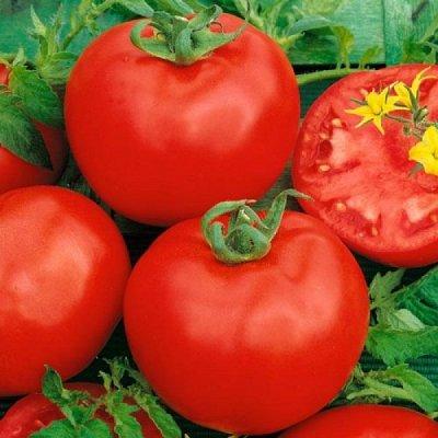 Семена плодово-ягодных кустарников и других растений — Семена овощей - разные овощи — Семена овощей