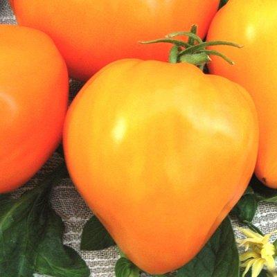 Семена от бегонии до петунии, а также семена овощей и зелени — Семена томатов — Семена овощей