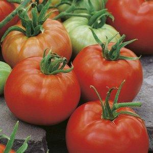 Томат Туз Среднеранний сорт. Размер листа крупный, цвет – светло-зеленый. Соцветие простое. Неспелый плод имеет зеленую окраску, спелый – красную. Форма плода плоскоокруглая. Качества: мясистый, тверд